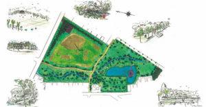 都市公園の自然化