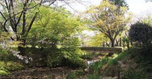 都市公園の自然化③