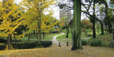 都市公園の自然化①